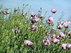 Blog The Garden of the Hesperides